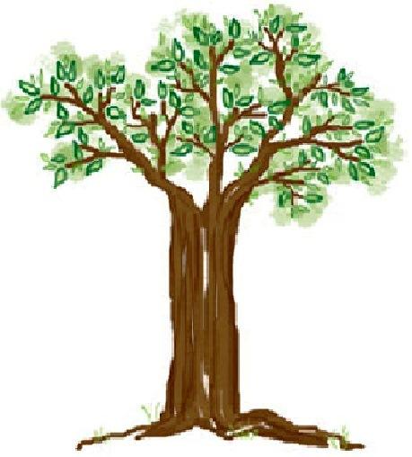 Menggambar pohon nangka karena pohon tersebut mewakili jenis tanaman